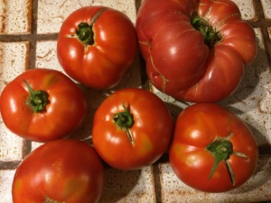 My gift of tomatoes.